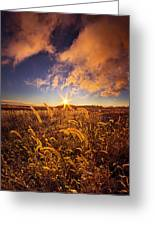 Nature's Romm With A View Greeting Card