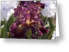 Nature's Ruffles Greeting Card