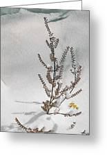 Natures Snow Coat Greeting Card