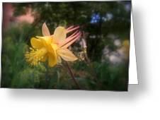 Natures Star Greeting Card