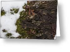 Nature's Still Life Greeting Card