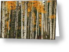A Quiet Place Greeting Card by Rick Furmanek