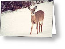 Natures Winter Visit Greeting Card