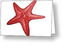 Nautical Red Starfish Greeting Card by Michelle Eshleman