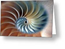 Nautilus Impression Greeting Card