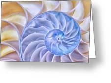 Nautilus Shell Greeting Card