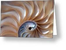 Nautilus Wave Greeting Card