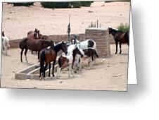 Navajo Herd Greeting Card
