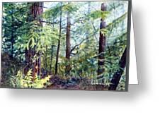 Navarro River Redwoods Greeting Card