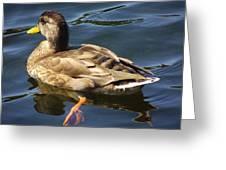 Navigatinng The Pond Greeting Card