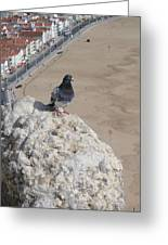 Nazare Pigeon Greeting Card