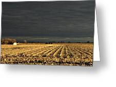 Nebraska Fields Greeting Card