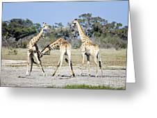 Necking Giraffes Botswana Greeting Card