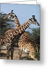 Necking Giraffes Greeting Card