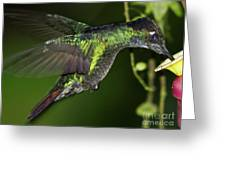 Nectar Feeding Hummingbird Greeting Card