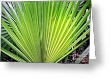 Needle Palm Greeting Card