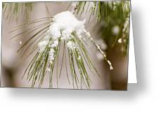 Needles In The Snow Greeting Card