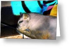 Negative Cat Greeting Card