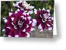 Neighbors Garden Treasures Greeting Card