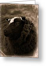 Nellah The Shetland Sheep  Greeting Card