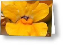 Nemesia Named Angelart Pear Greeting Card