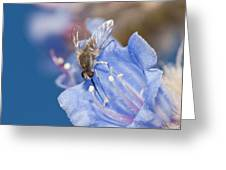 Nemestrinid Fly Feeding Greeting Card