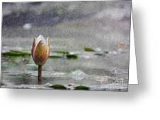 Nenufares Water Lilies Oleo Greeting Card