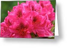 Neon Azalea  Greeting Card