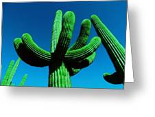 Neon Catus Greeting Card by Todd Sherlock