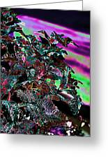 Neon Coleus Greeting Card