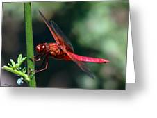 Neon Skimmer Greeting Card