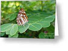 Neptis Hylas / Common Sailer Butterfly Greeting Card