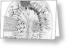 Nerve Cells, 1894 Greeting Card
