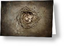 Nest Eggs Greeting Card