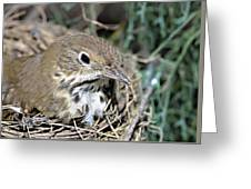 Nest In A Tree Greeting Card