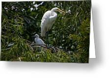 Nest Lookout Greeting Card