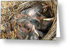 Nest Of American Robins Greeting Card