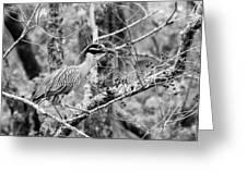Nester Greeting Card