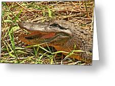 Nesting Alligator Greeting Card
