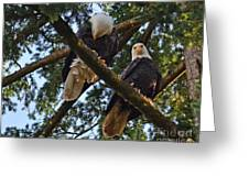Nesting Bald Eagles Perching Greeting Card