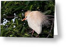 Nesting Cattle Egret Greeting Card