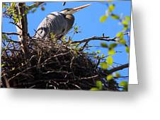 Nesting Great Blue Heron Greeting Card