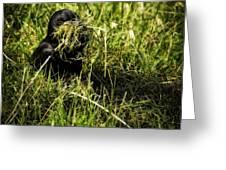 Nesting Material Greeting Card