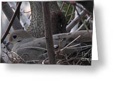 Nesting Morning Dove Greeting Card