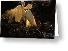 Nesting Pair Of Snowy Egrets Greeting Card