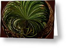 Nesting Pine Orb Greeting Card