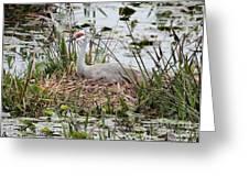 Nesting Sandhill Crane Greeting Card