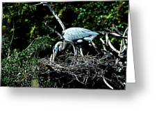 Nesting Season Greeting Card