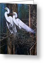 Nesting Snowy Egrets Greeting Card