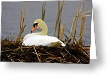 Nesting Swan Greeting Card